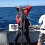 Ian Fey Gummy Shark 19.01.13