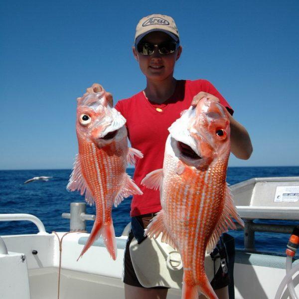 Bight Redfish
